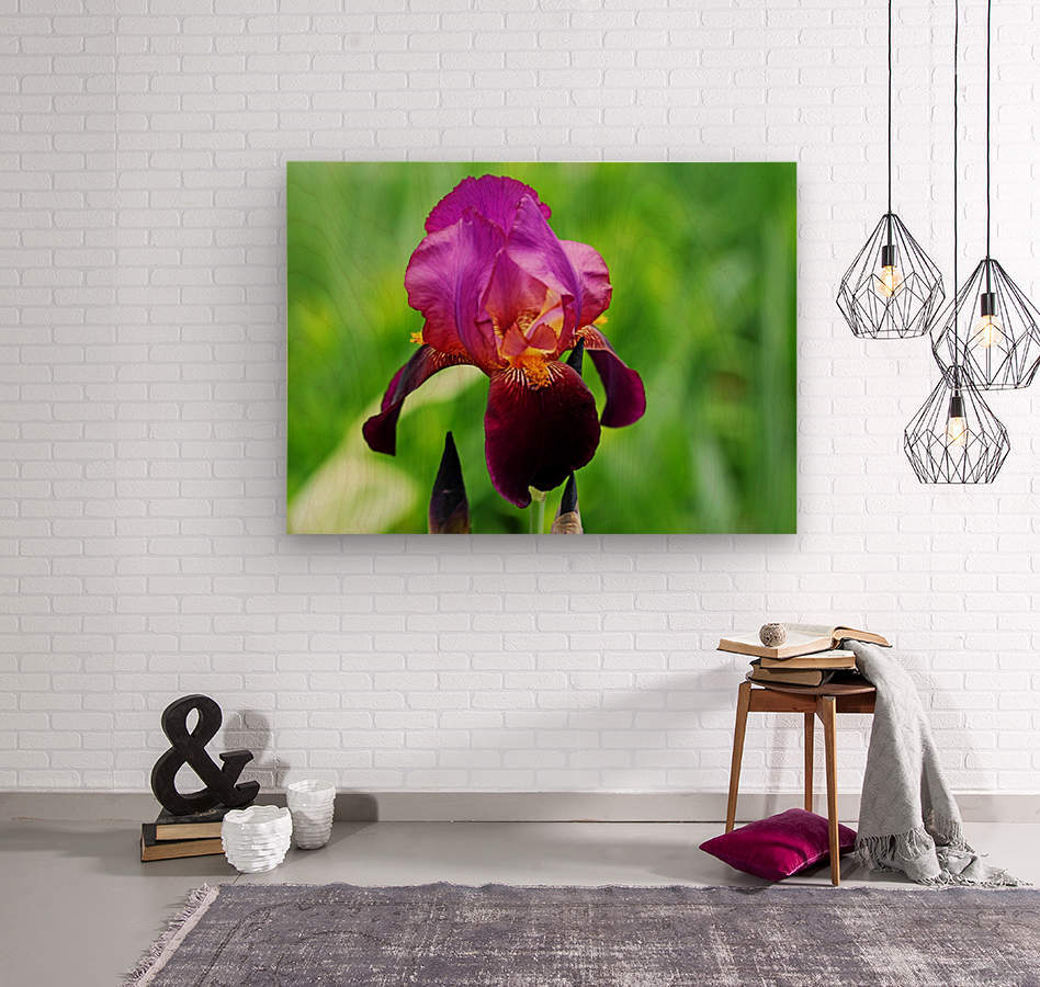 Bold And Beautiful  Wood print