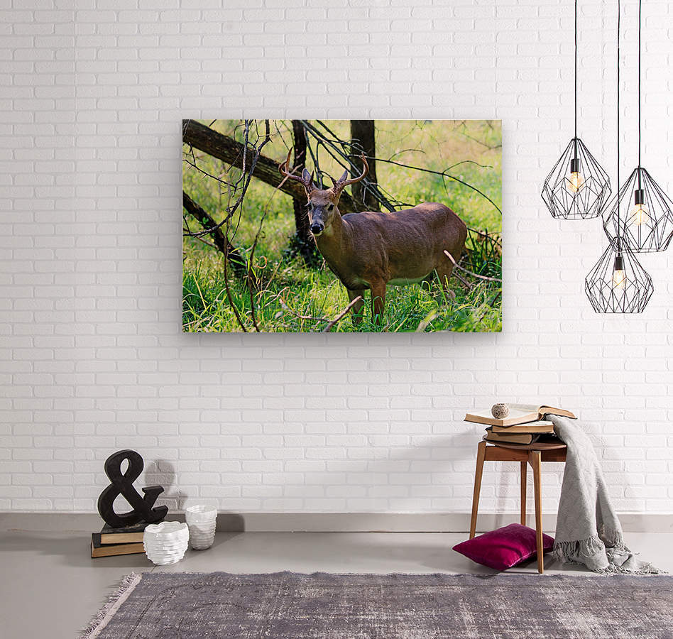 A Buck In The Grass  Wood print