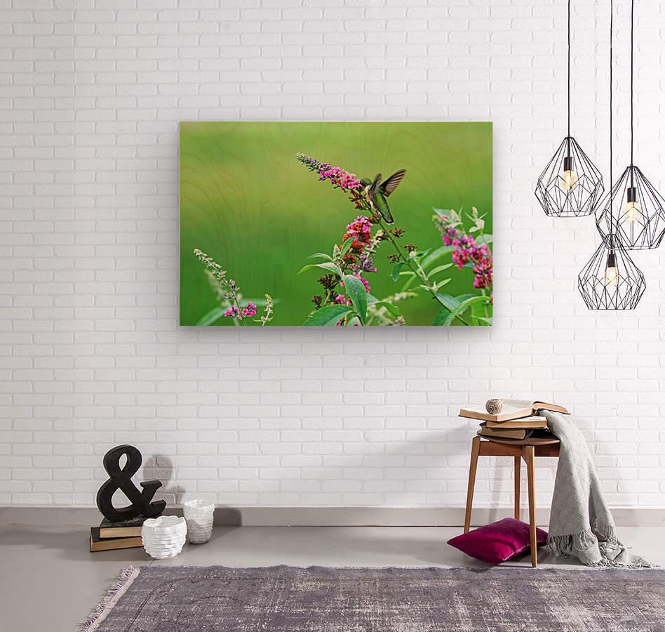 Jewel In The Garden  Wood print