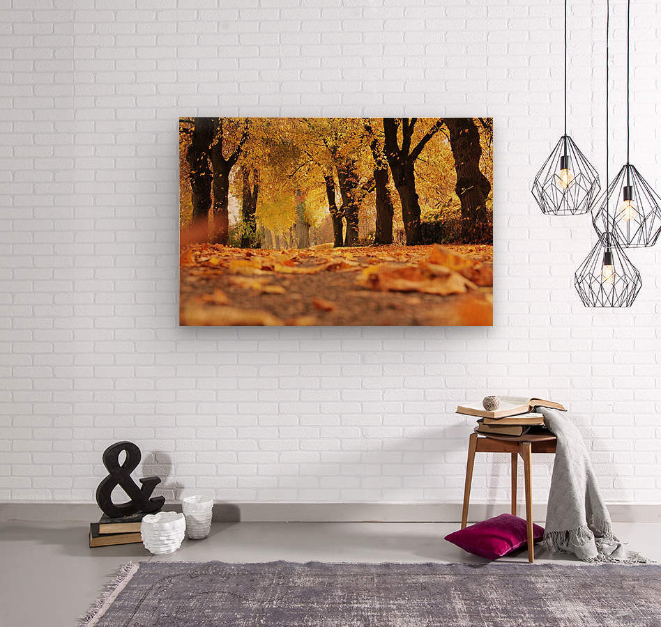 Beautiful Nature Landscape Tree Forest Trees Photography landscape photo Scenery  Wood print