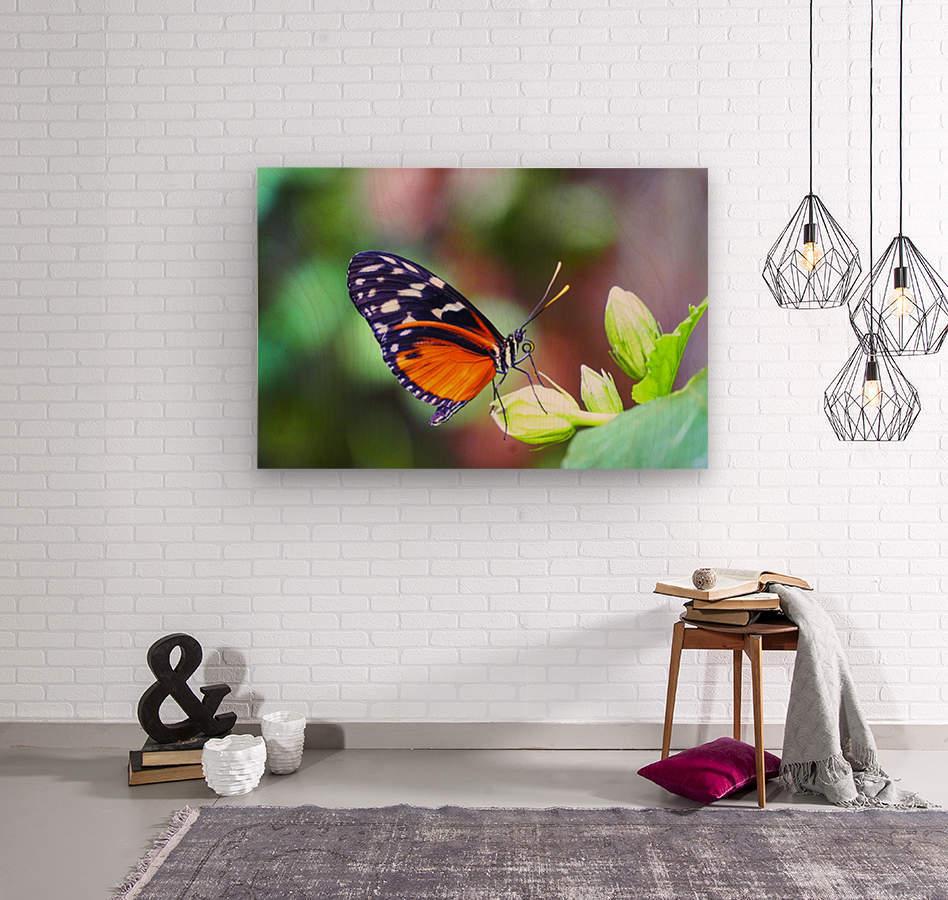 Monarch on a Bud  Wood print