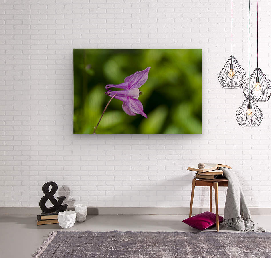 Purple Columbine 2  Wood print