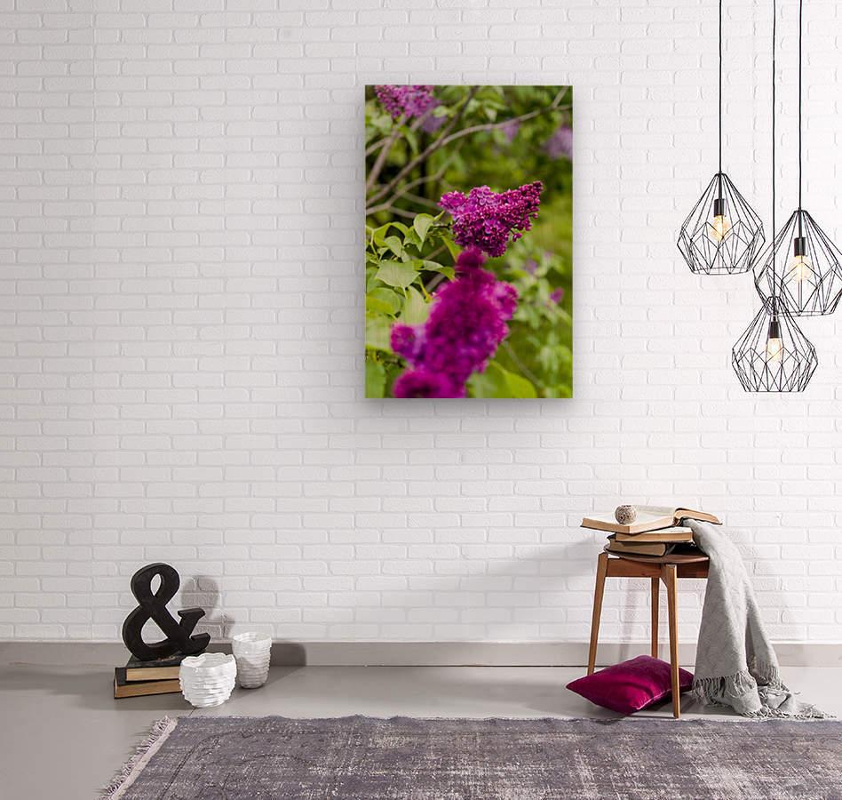 Purple Lilac Blossoms 2  Wood print