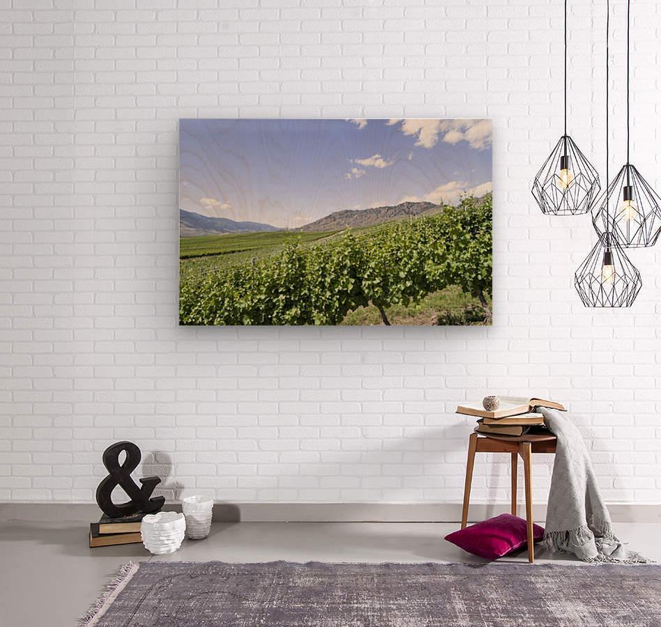 Okanagan Valley winery  Wood print