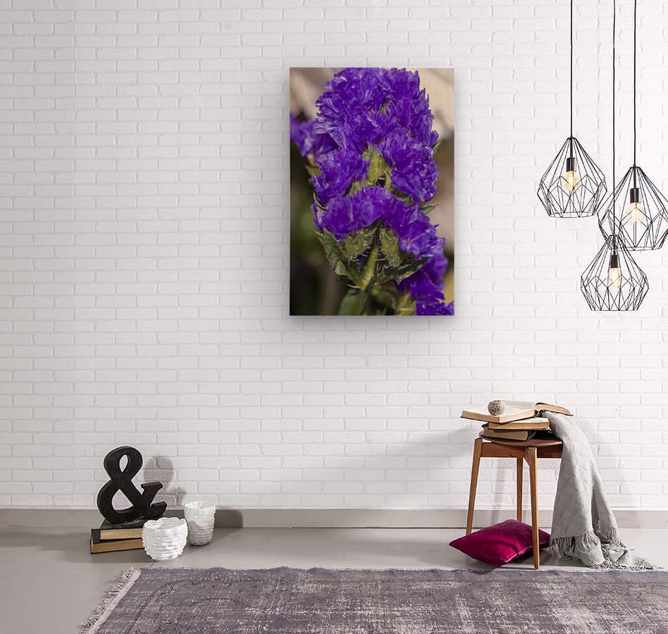 Purple Statice Flower  Wood print