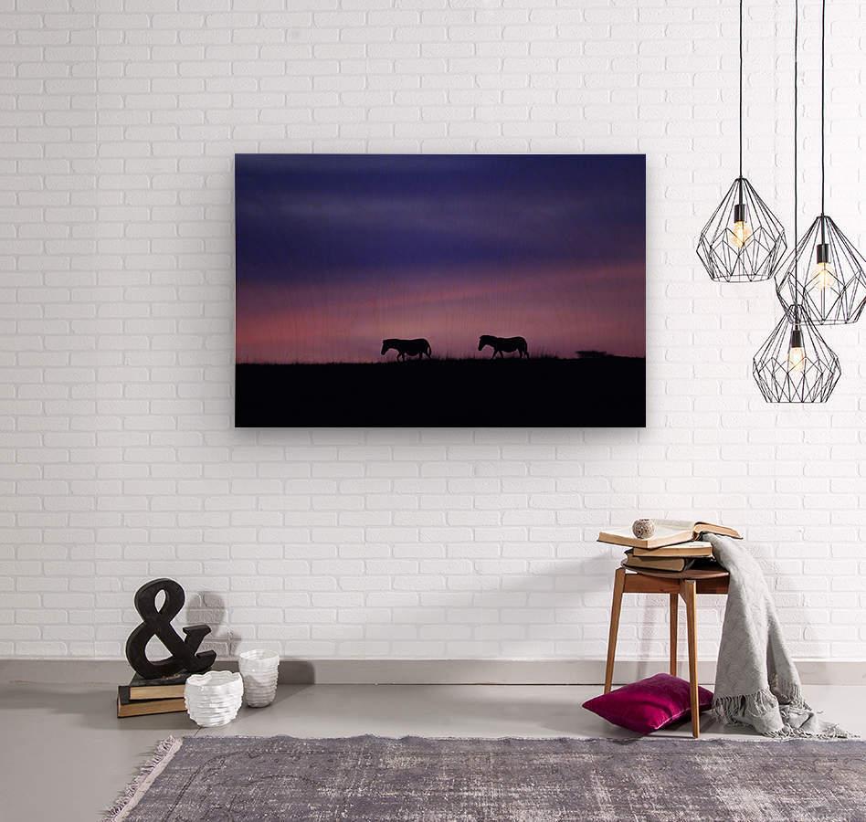 Zebra Sunrise  Wood print