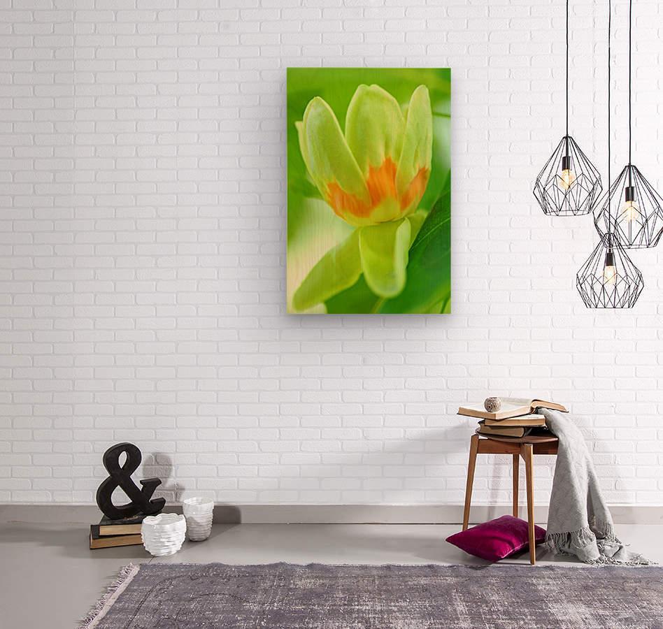Tulip Poplar Flower  Wood print