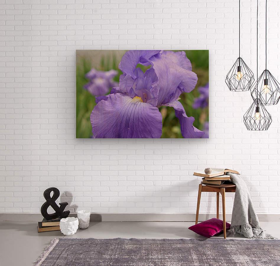 Purple Iris Photograph  Wood print