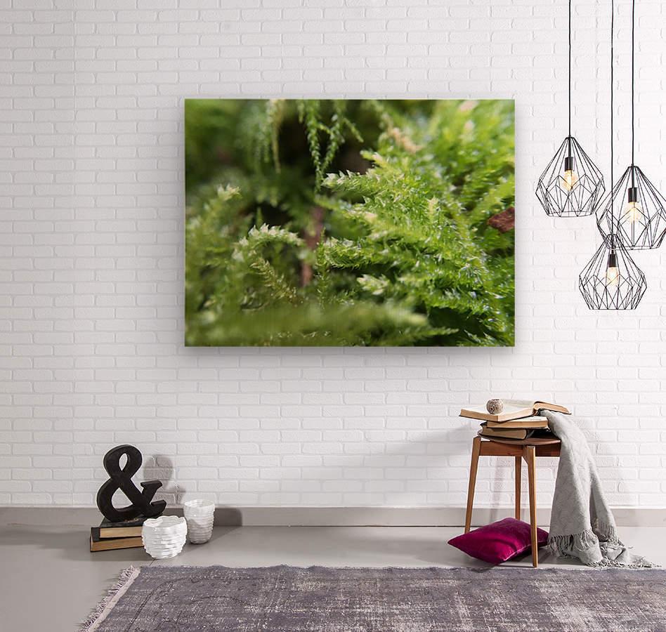 IMG_3563  Wood print