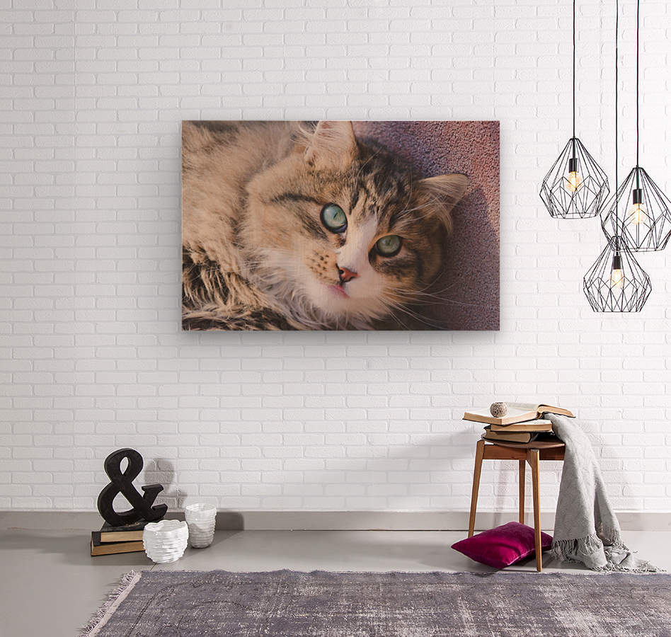 March Cat  Wood print