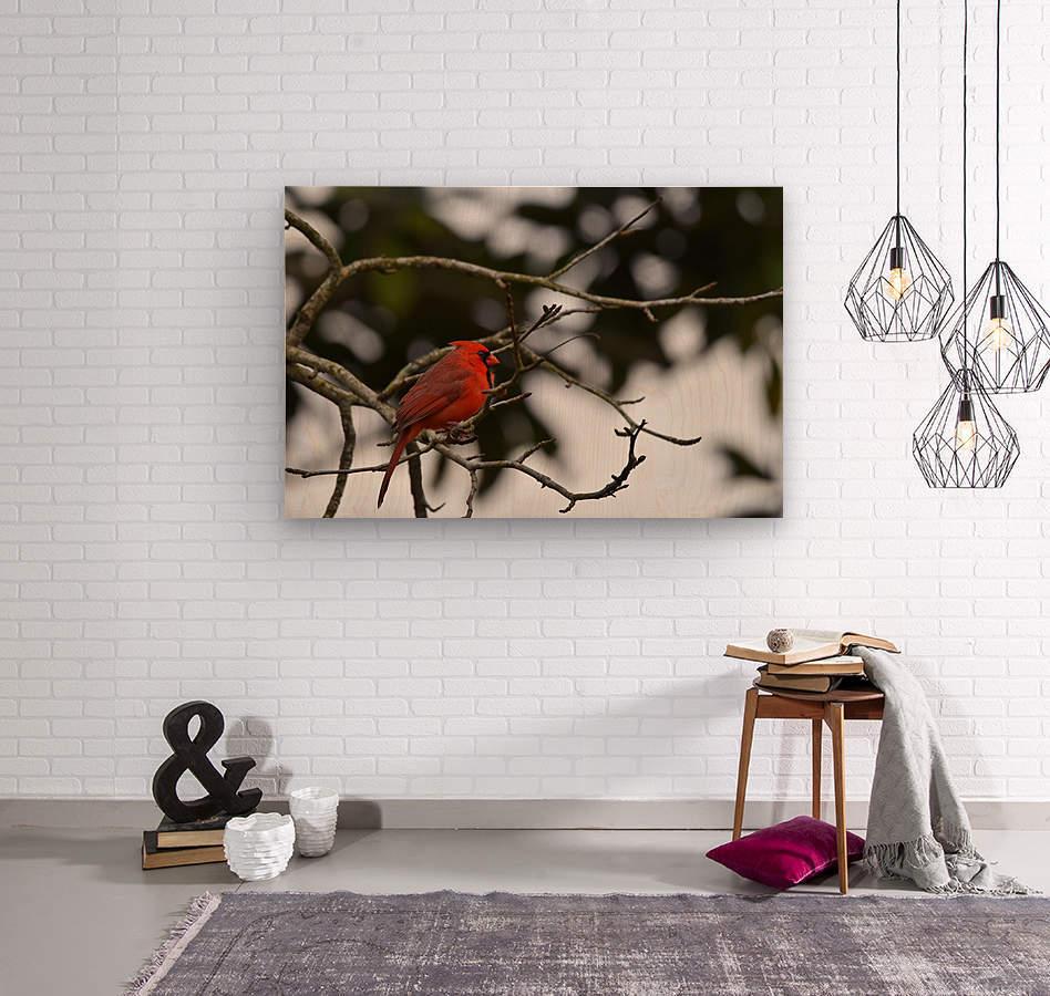 Cardinals 4  Wood print