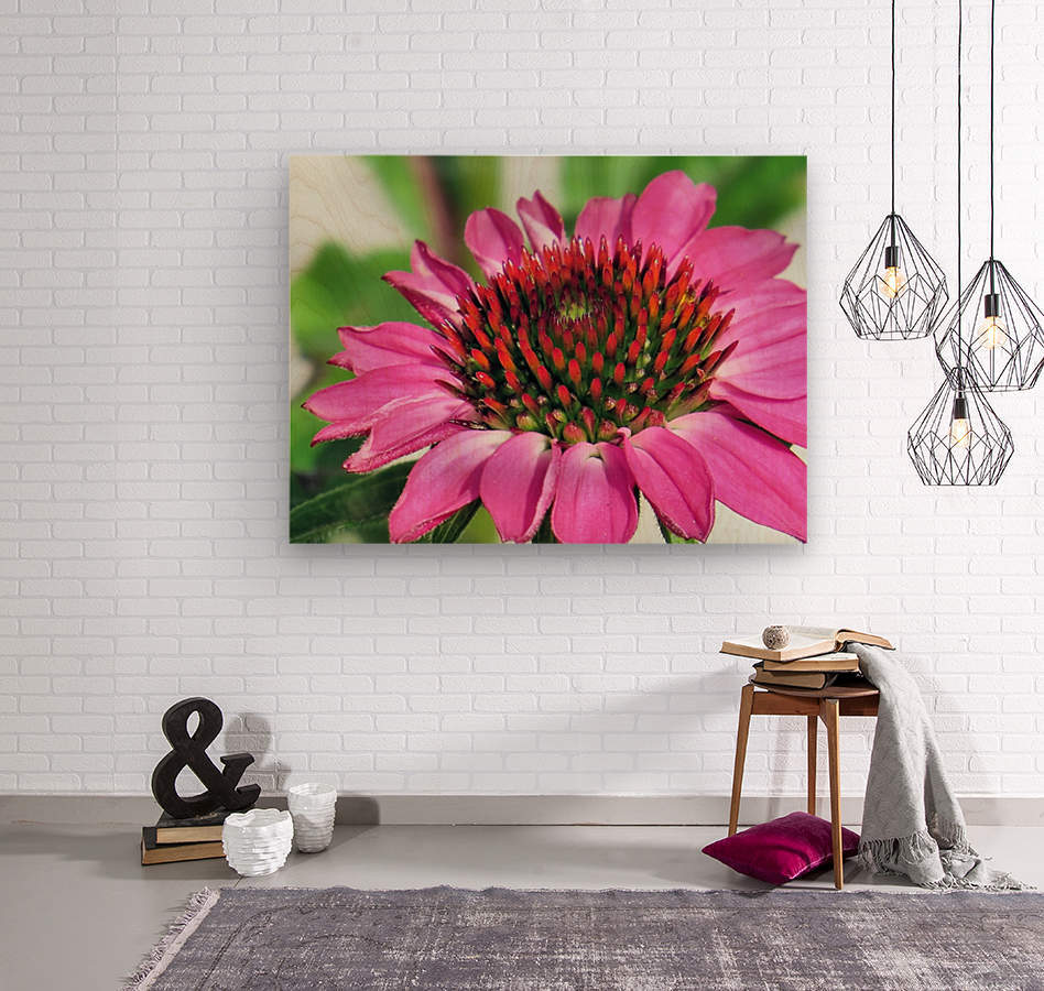 Pink coneflower   Wood print