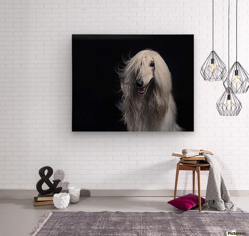 Afghan Hound Portrait  Wood print