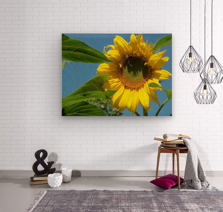 Sunflower  Wood print