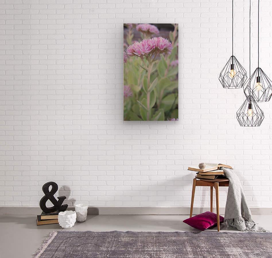 Flower (43)  Wood print