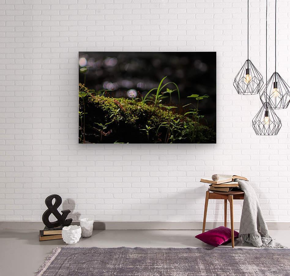 Beautiful Moss  Wood print