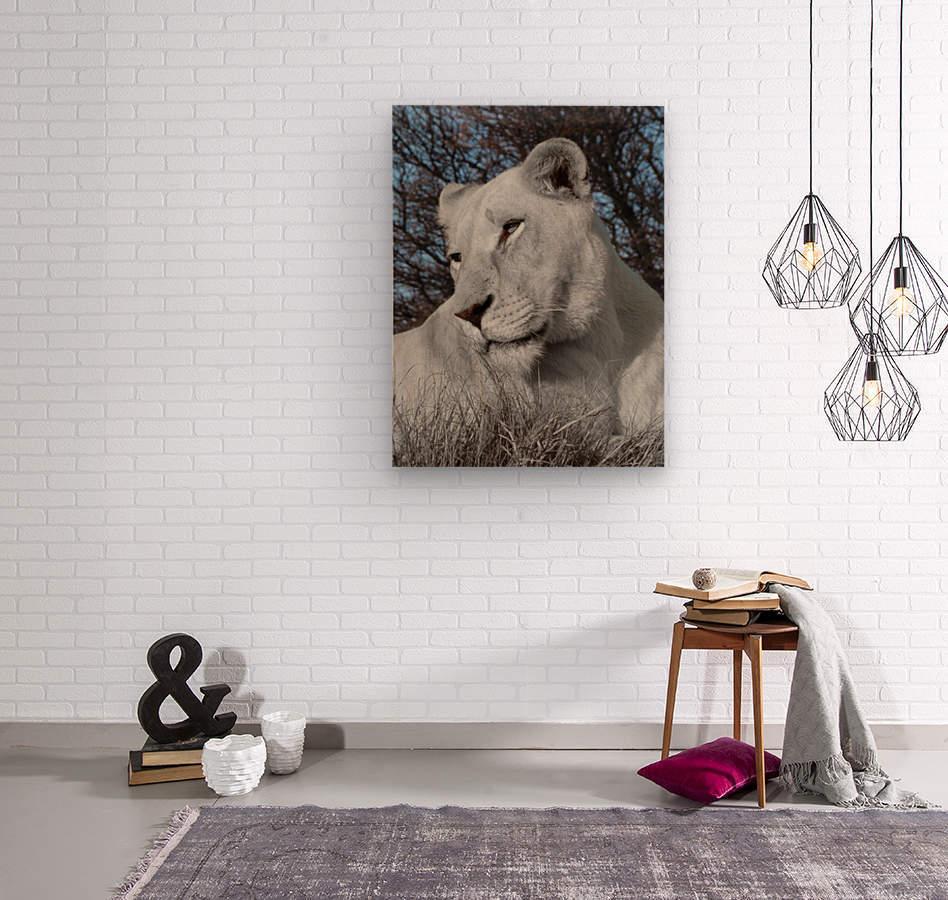 White Lion Female 1030593  Wood print
