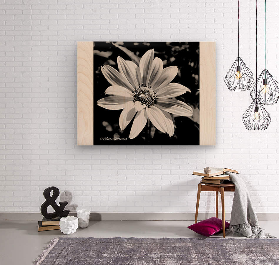 Daisy in bw  Wood print