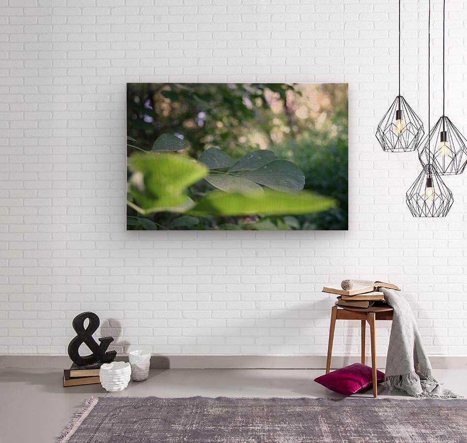 blur leaf  Wood print