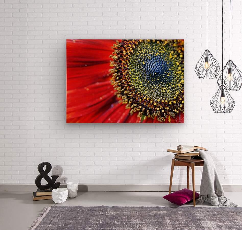 Spiral Center Of Sunflower  Wood print