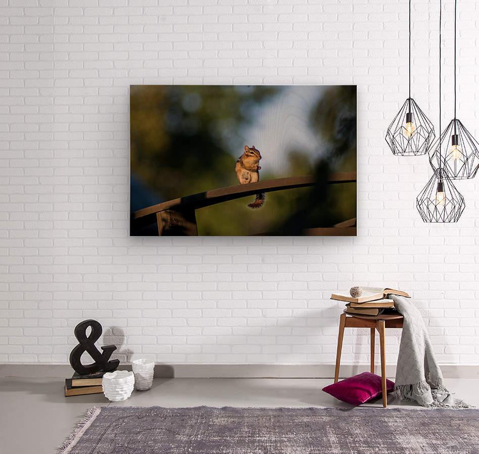 Squirrel  Wood print