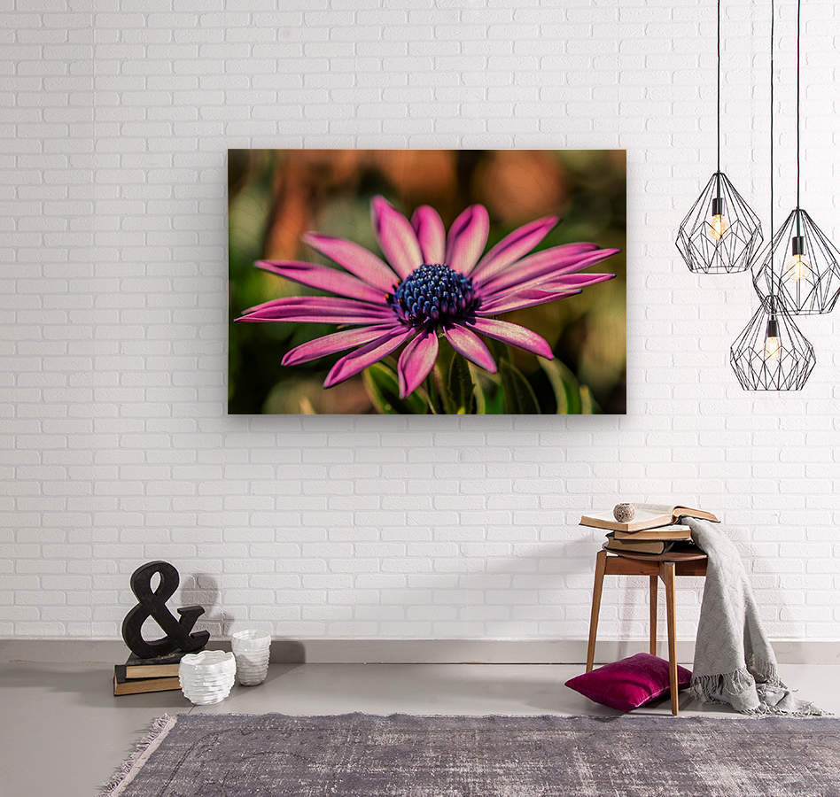 Daisy in Pink  Wood print