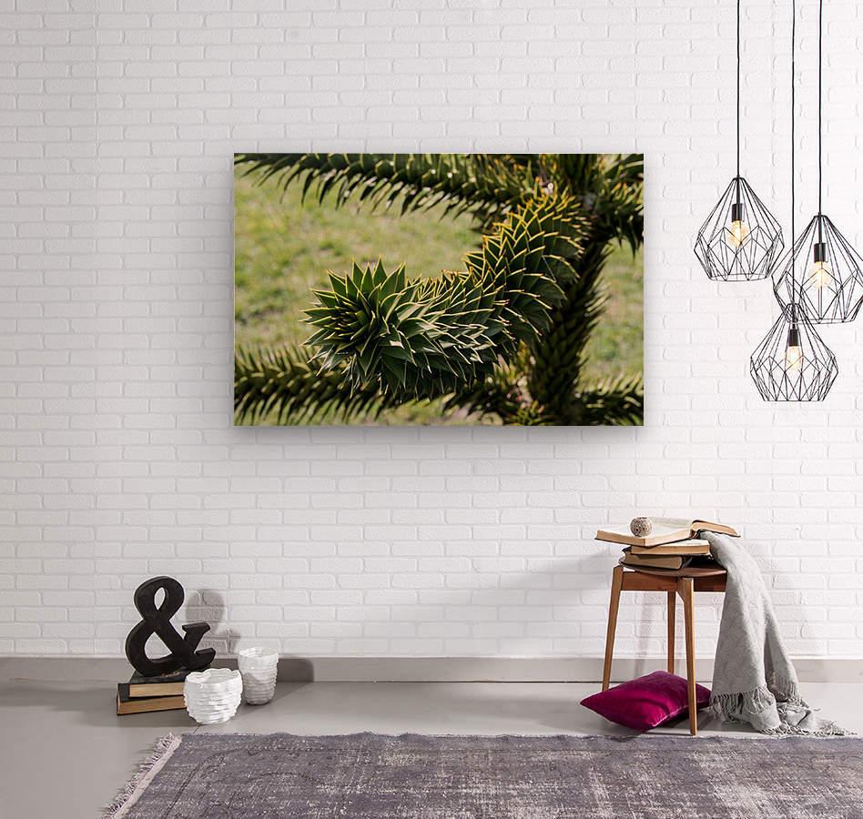 Plant Image  Wood print