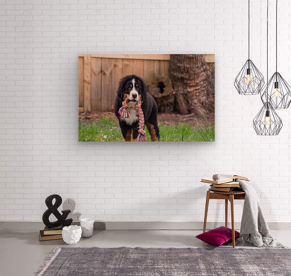 Bernese Mountain Dog Puppy 8  Wood print