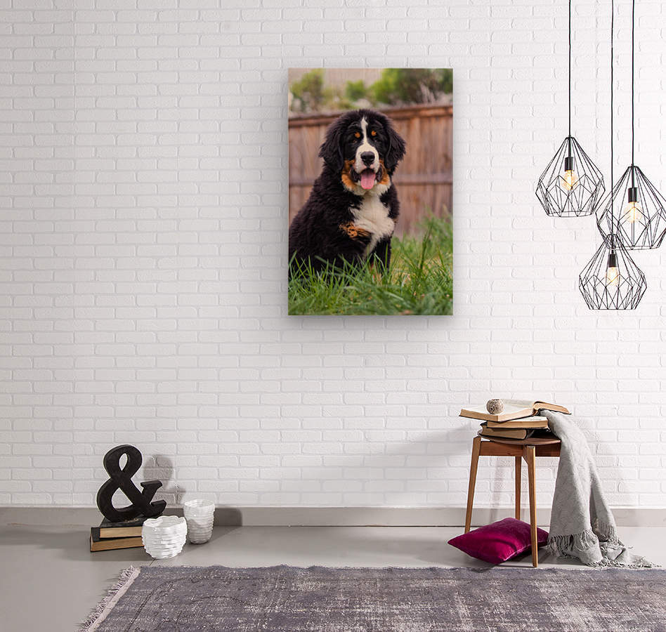 Bernese Mountain Dog Puppy 1  Wood print