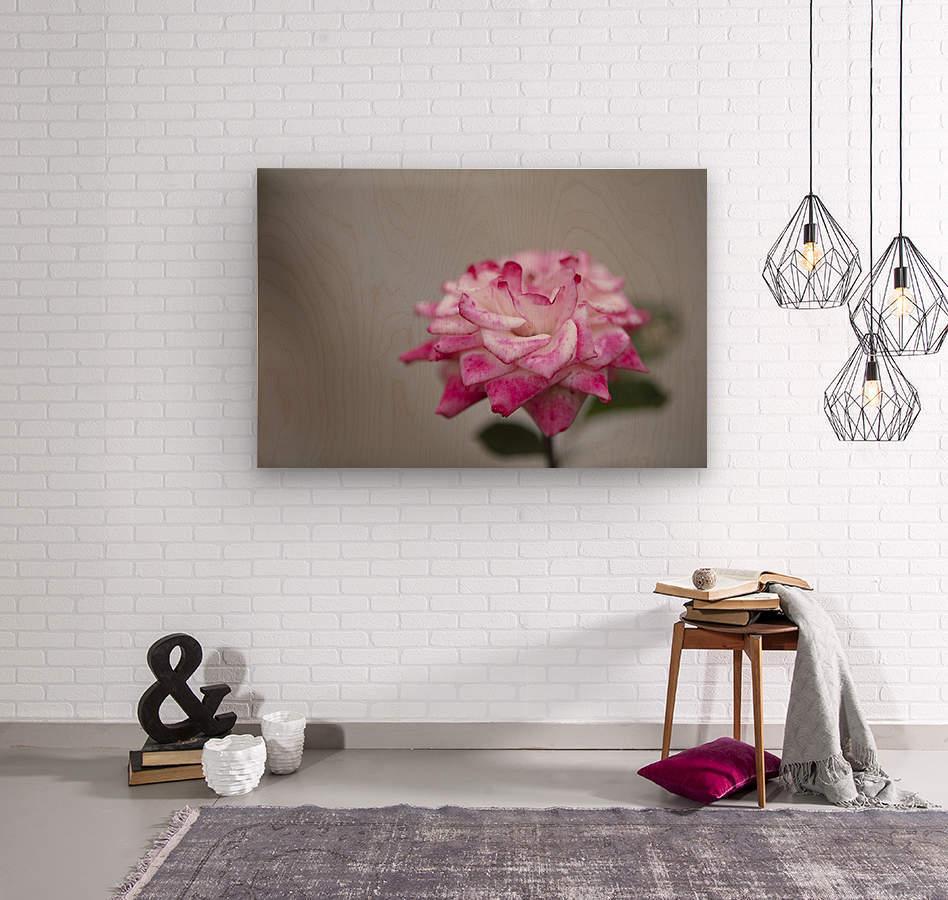 Desert rose  Wood print