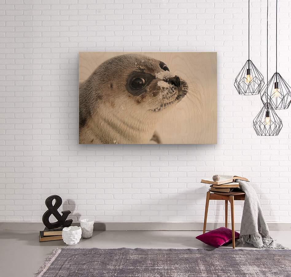 LRM_EXPORT_24334493503053_20191009_150407586  Wood print
