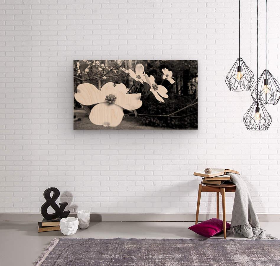 North Carolina Dogwood Flowers   Wood print