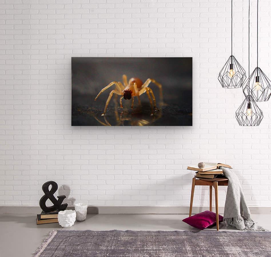 Best spider leg forward  Wood print