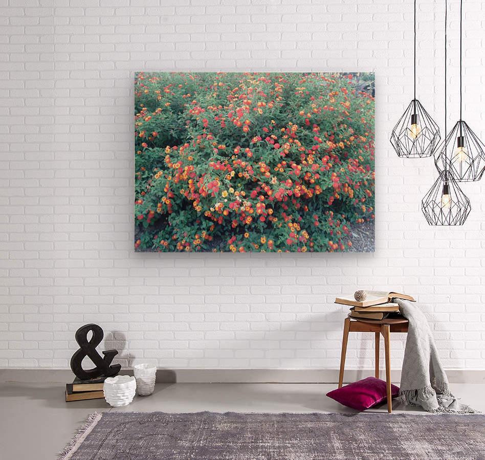 Summer red flowers  Wood print