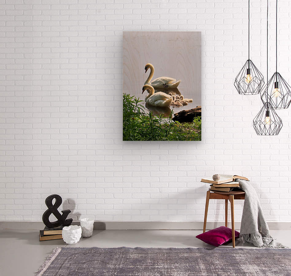 Swans and Sygnets on lake  Wood print