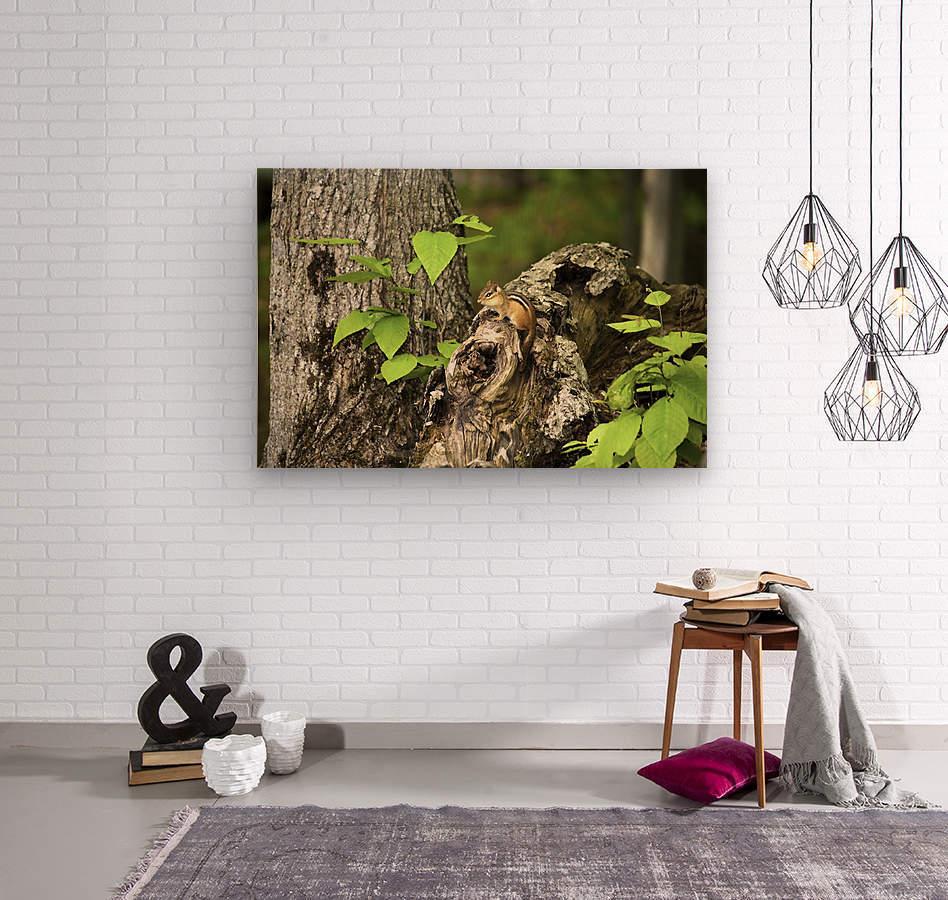 Chipmunk on tree  Wood print