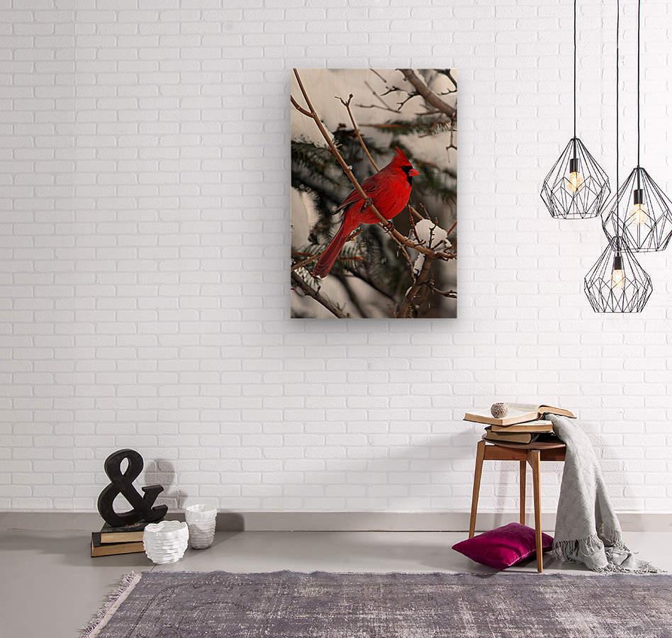 Vertical Cardinal  Wood print