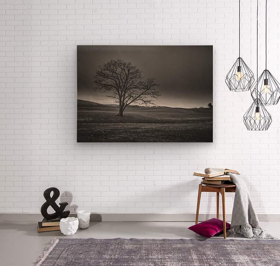 November Tree  Wood print