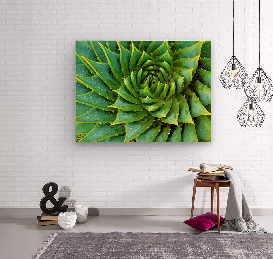 Cactus Spiral  Wood print