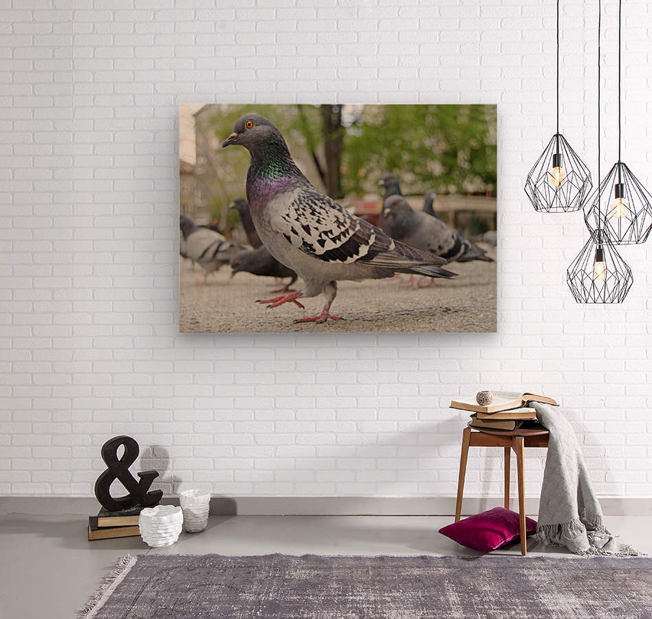 Pigeon in the park  Wood print
