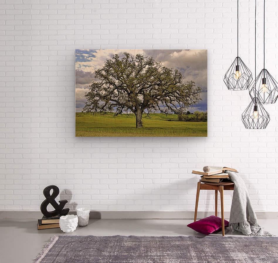 Lone Settler  Wood print