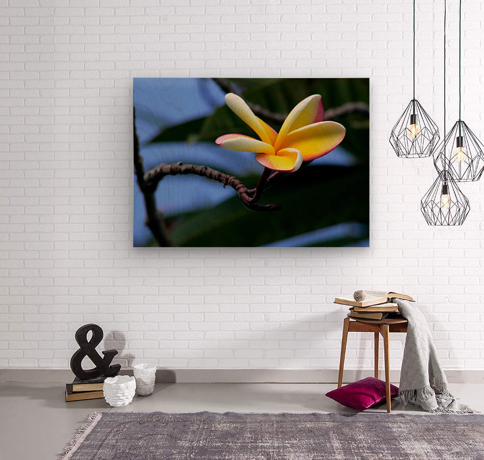 Yellow Plumeria   Wood print