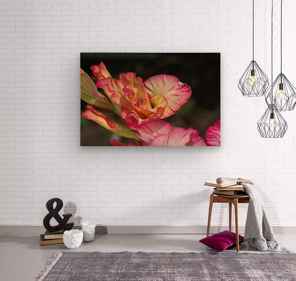 Gladiolus Display  Wood print