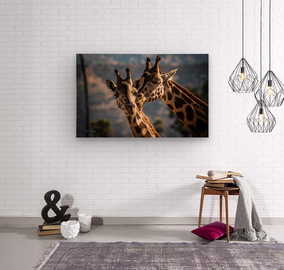 Loving Giraffes  Wood print