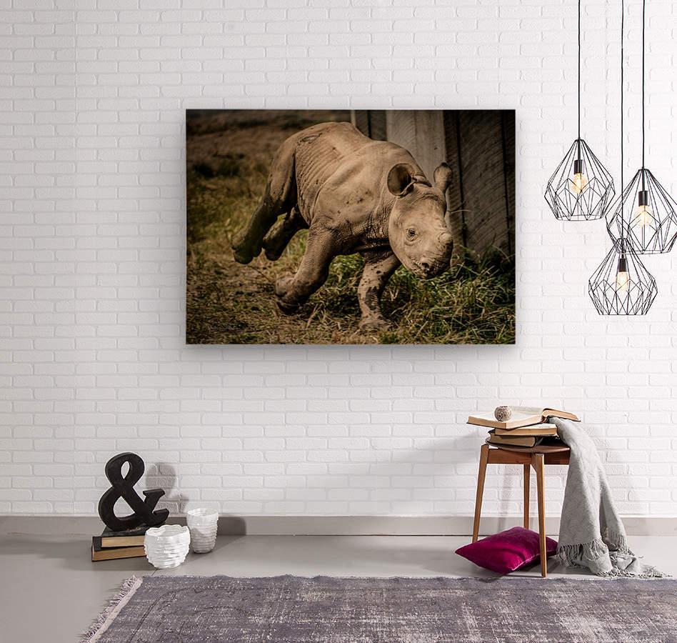 Baby Rhino  Wood print