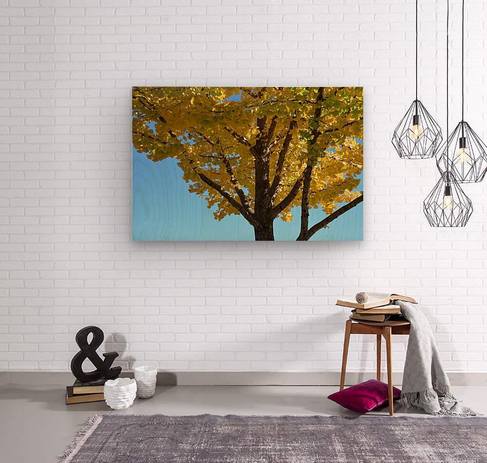 Yellow Fall Foliage Photograph  Wood print