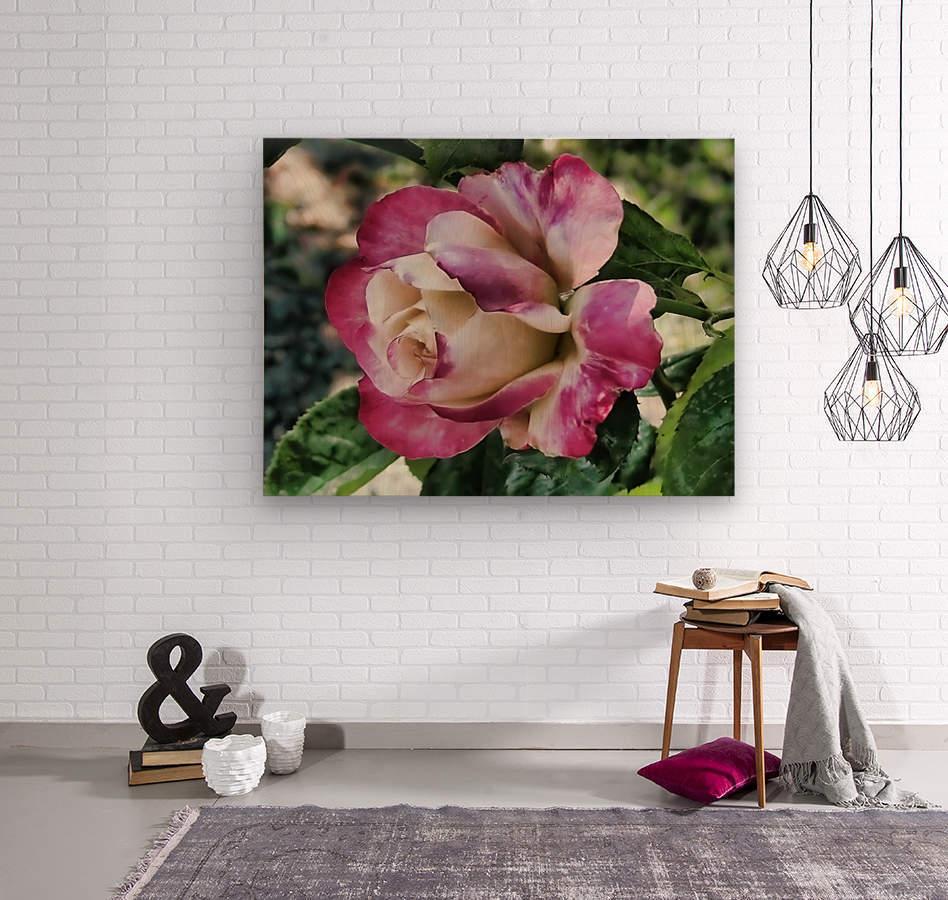 Lavender Rose  Wood print