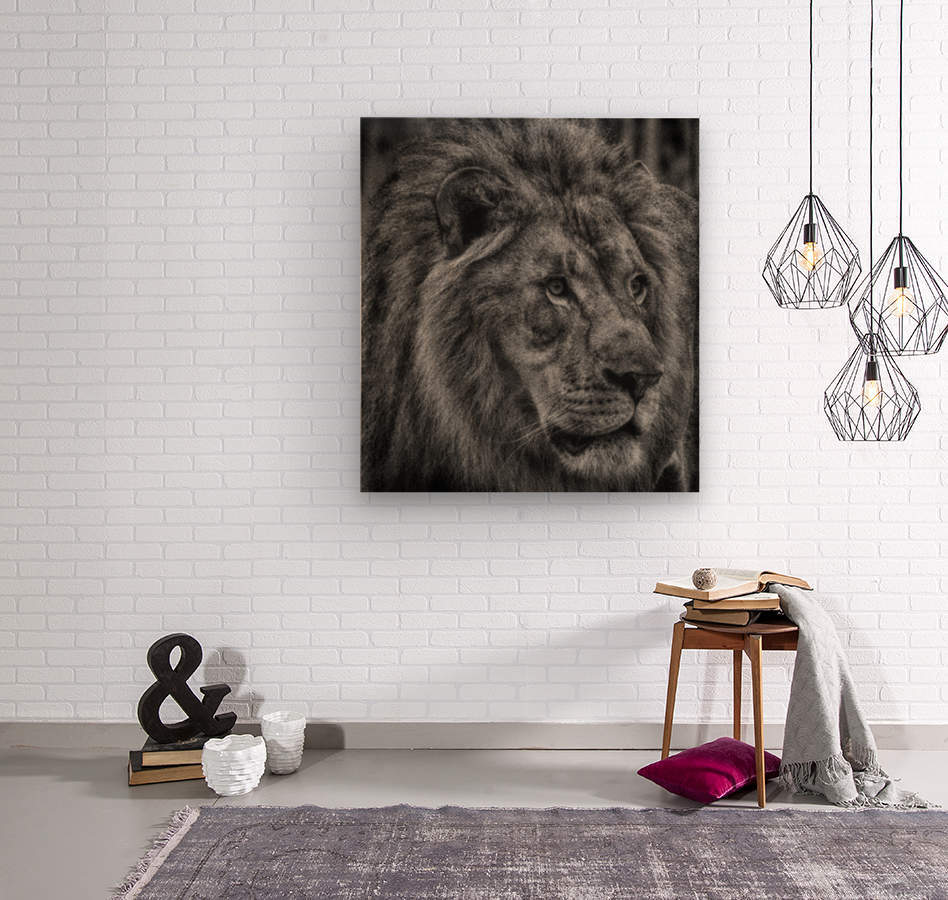 Artistic black and white Lion  Wood print