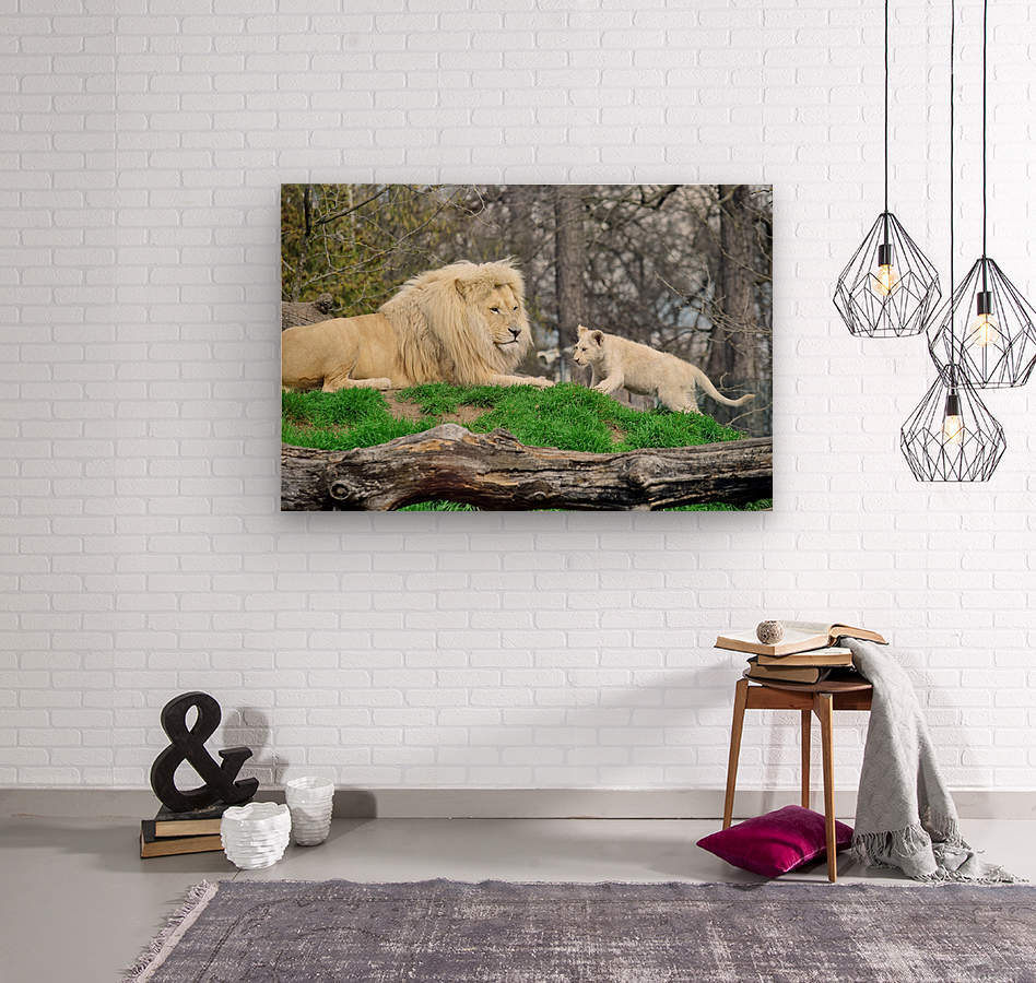 White Lion with Baby  Wood print