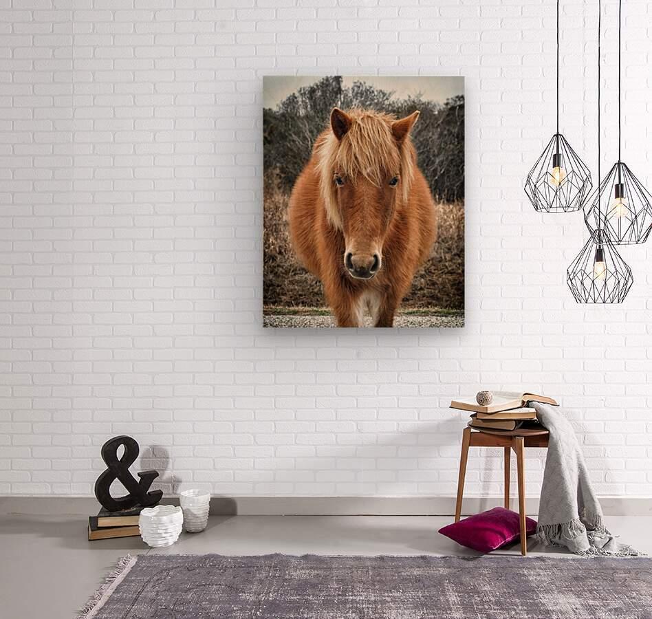 Assateague Horse Miekes NoeLani  Wood print